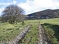 Tractor Track near Gwern-brain-uchaf - geograph.org.uk - 354105.jpg