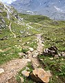 Trail and grass.jpg