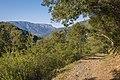 Trail in Vieussan 02.jpg