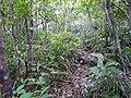 Trail of Mount Awa, Okinawa 02.jpg