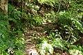 Trail of Mount Omoto 201912 05.jpg