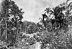 Northern Railroad of Guatemala - Jungle section in 1896. La Ilustración Guatemalteca photograph.