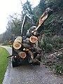 Tree Removal - geograph.org.uk - 616489.jpg