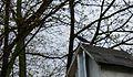 Tree Swallow at Lake Sinissippi - panoramio.jpg
