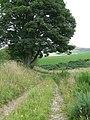 Tree beside the track, Nether Handwick - geograph.org.uk - 520368.jpg