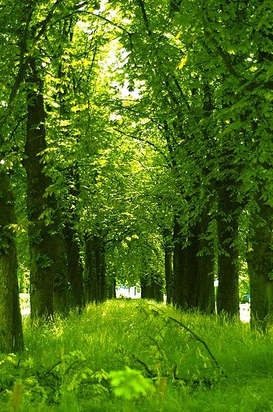 Tree tunnel#1