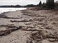 Trees on beach at Target Rock National Wildlife Refuge (NY) (16607349908).jpg