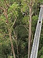 Treetop views at the Otway Fly.jpg