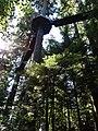 Treetops Adventure.JPG