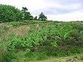 Tumulus by Vivod Mountain - geograph.org.uk - 191744.jpg