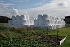 Two stacks of silage bales.jpg