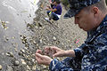 US Navy 110811-N-CL698-056 Master-at-Arms 1st Class Samuel Moon spreads manila clams on the shore at Naval Magazine Indian Island.jpg