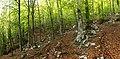 Ukanc - forest 2.jpg