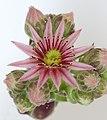 Una flor más (9107065473).jpg