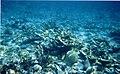 Underwater Bahamas 1998.jpg