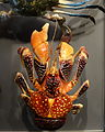 Unidentified crustacean - Museum fur Naturkunde, Berlin - DSC00126.JPG