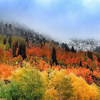Silicon Slopes - Fall colors in Utah