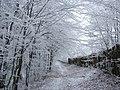 V bitove za humny v zime.JPG