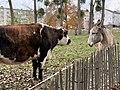 Vache Âne Parc Croissant Vert Neuilly Marne 3.jpg