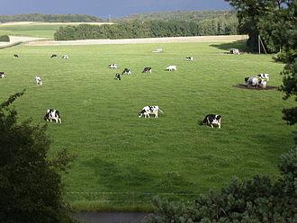 Bière - Cattle farm at Bière