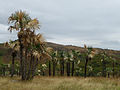 Valle de los Ingenios depuis le Mirador del Valle (2).jpg