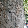 Vandalisme diatas batu.jpg