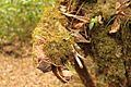 Vegetacion de Bosque Tropical en Costa Rica 022.jpg