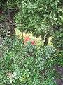 Veltrusy. Kuchyňská zahrada 8.JPG