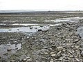 View north along the Taw Estuary at low tide - geograph.org.uk - 1323027.jpg