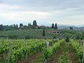 View of Chianti vineyards.jpg