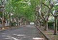 Villa-Argentina-Calle.jpg