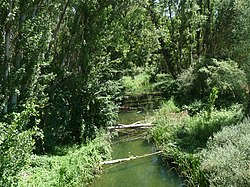 Vista del río Tajuña (Brihuega) desde la CM-2005, al este.jpg