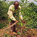 Voa murdock rwanda farming musangwa 300 oct2011.jpg