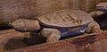 WLANL - Pachango - Tropenmuseum - Zielenprauw (detail).jpg