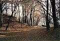 Wald im Herbst bei Haus Horst, Essen.jpg