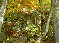WaldmuenchenKatzbachFelsen 26.jpg