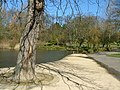Ward Jackson Park Pond - geograph.org.uk - 361499.jpg
