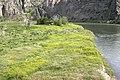 Weeds11 (25209946878).jpg