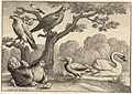 Wenceslas Hollar - A brooding hen.jpg