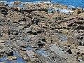 West Beach rocks Burnie 20201025-004.jpg