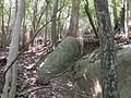 When the processed megalith toppled, the tree was damaged and it unified. - panoramio.jpg