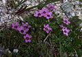 Whf purple 28.jpg