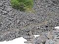 White Pass Railway - Trail of 98 (2).jpg