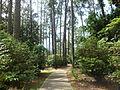 Whitehead Camellia Trail 5.JPG