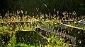 Wild grass at the Ancient Buddhist Site of Sarnath.jpg