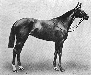 Winkipop British-bred Thoroughbred racehorse