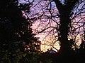 Winter sunset, Woodgreen, Witney - geograph.org.uk - 385141.jpg