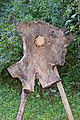 Wooden Tripod (15864371102).jpg