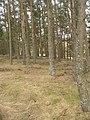 Woodland, Camp Moor - geograph.org.uk - 1754529.jpg