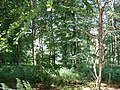 Woods nr Michelgrove - geograph.org.uk - 21774.jpg